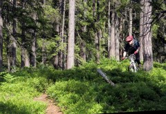 Fun tight singletrack
