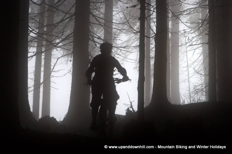 Riding in the forests on a foggy morning