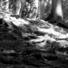 Black and White photo of steep descent on a mtb
