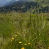 Alpine flowers in Westendorf Austria