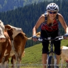 Woman smiling on a bike passing a few cows in Austria
